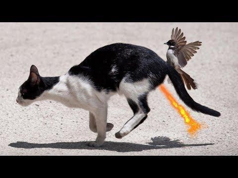 Как кота уговаривал синичку за 4 ноября