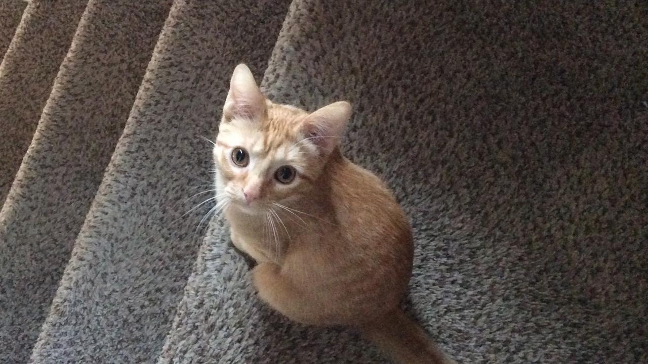 Diamond Kitty Cat Live Stream