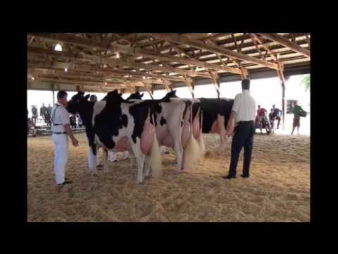 2013 WI Championship Show Cow 16