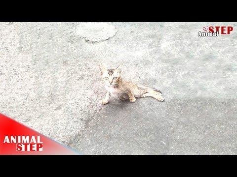 Stray Kitten in Paralyzed Condition Dragging on the Street to Find Food and Screaming for Help