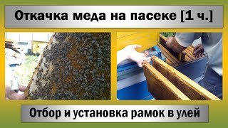 Откачка меда ☆ Отбор и установка откачанных рамок [1 ч.](, 2014-07-02T18:40:41.000Z)