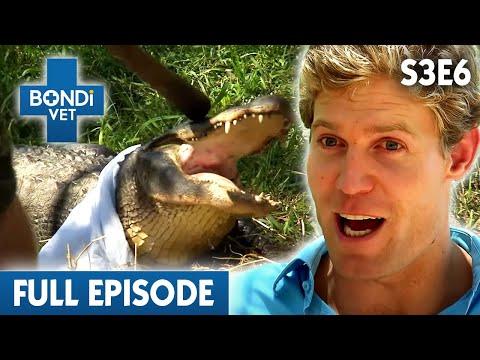 🐊 Angry Alligator   S03E06   Bondi Vet