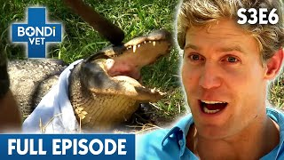 🐊 Angry Alligator | FULL EPISODE | S03E06 | Bondi Vet