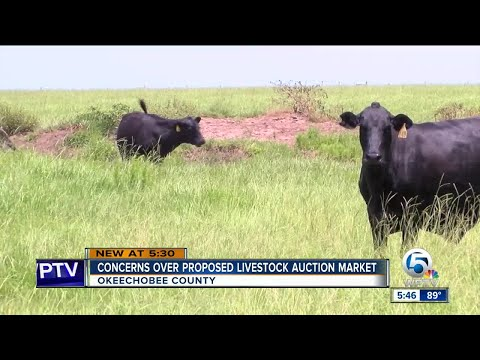 Okeechobee County residents concerned about proposed livestock auction market