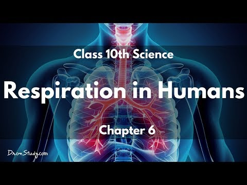 Respiration in Humans - Life Processes-1 (Eng): CBSE Class 10 X Science (Biology)