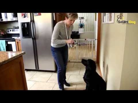 Teach Your Dog to Wait for His Food