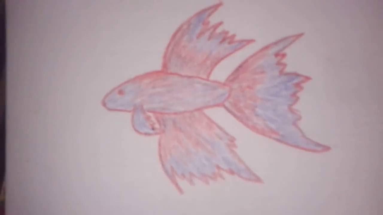 Cara Menggambar 3d Tiga Dimensi Gambar Ikan Cupang - YouTube