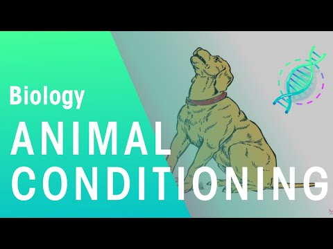 Animal Conditioning | Ecology & Environment | Biology | FuseSchool
