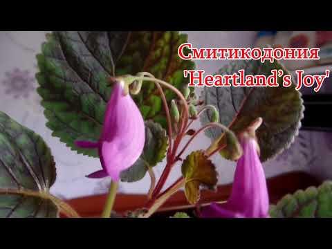 Вопрос: Когда цветет ахименес В какое время года, в каком месяце?