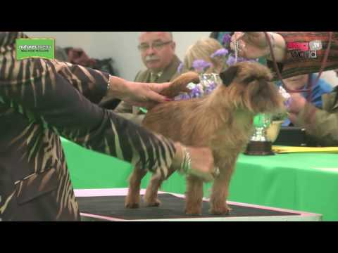 WELKS Championship Dog Show 2017 - Toy group FULL