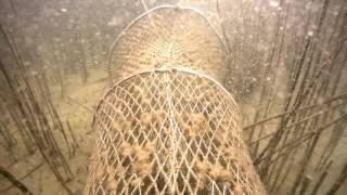 Kłusownictwo na Jeziorze Szarcz Duży