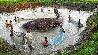 Die tödlichsten Kreaturen im Amazonas