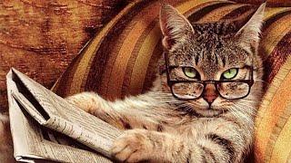 Смешные видео про котов и других животных Новое видео про котов 2018