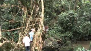 Root bridge in Cherrapunji