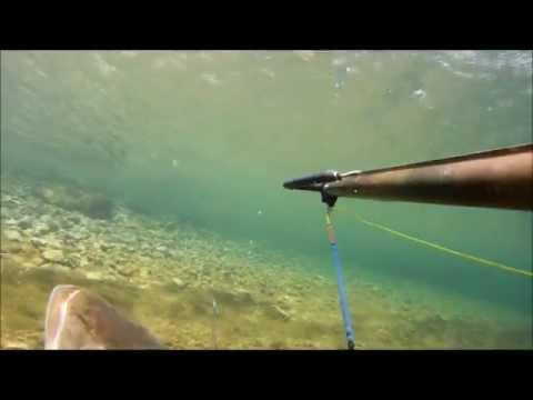 Spearfishing Striper- Colorado River