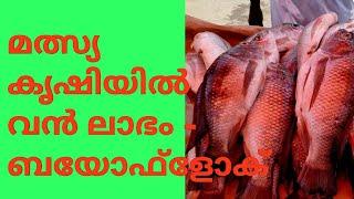 Biofloc fish farming in Kerala