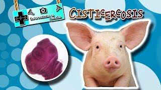 Cisticercosis (¿El consumo de carne lo ocasiona?) |Enfermedades de los animales|