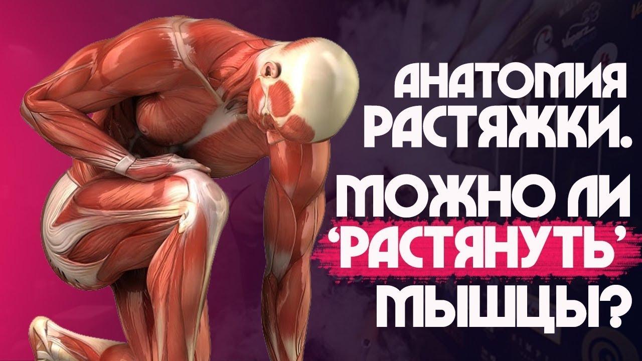 РАСТЯЖКА и СТРЕТЧИНГ. КАК алкоголь влияет на ГИБКОСТЬ? Мышцы, сухожилия и связки