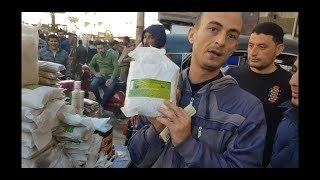 سوق الحمام من #جمهورية_المحله_الكبري ،التحديق ، الأدوية، أمراضها و علاجها Egyptian pigeon's market