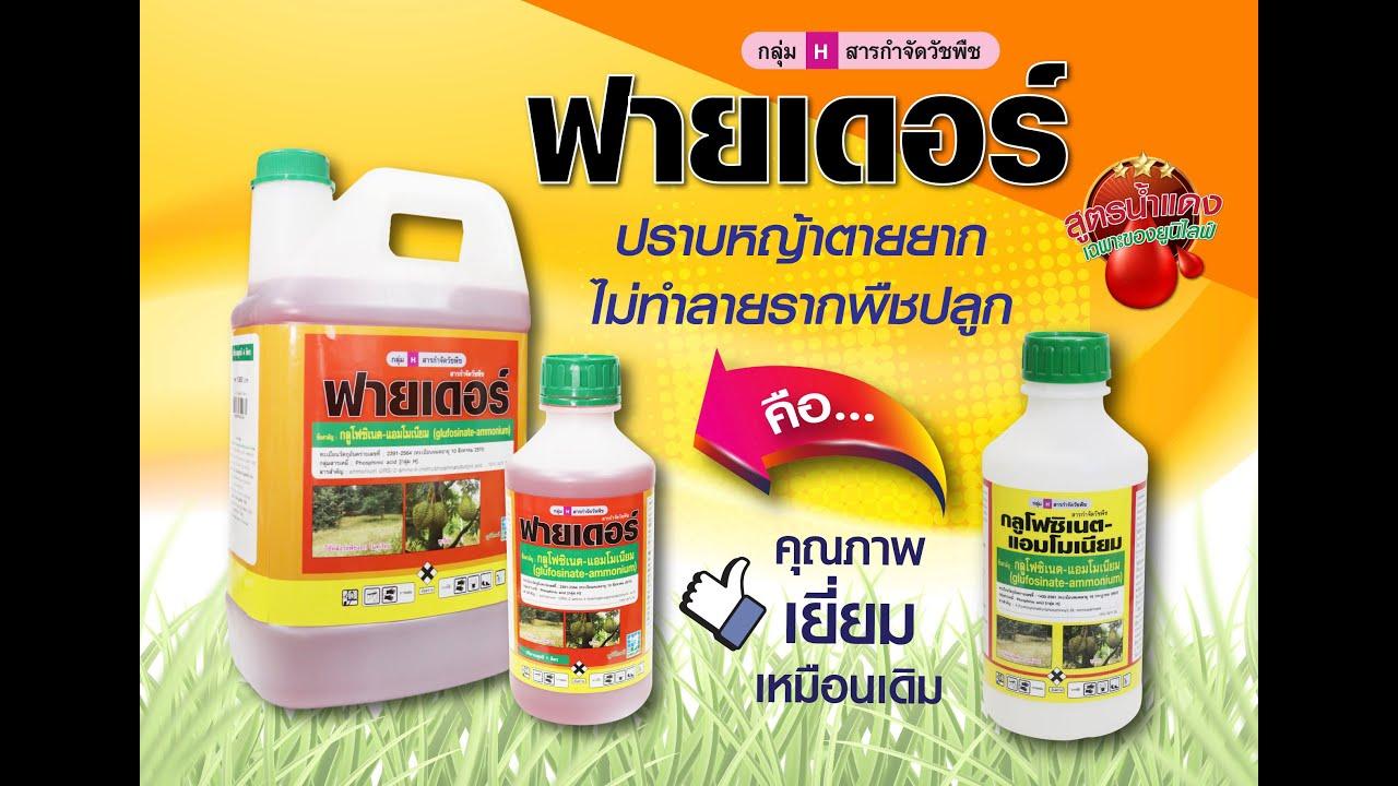 มุมหมอพืช EP.22 : กลูโฟซิเนต-แอมโมเนียม กำจัดหญ้าหวาย สนใจติดต่อ Line ID : @unilife โทร.023995555