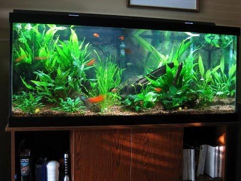 DIY HOME MADE Unique Aquarium Interior Design Ideas ...