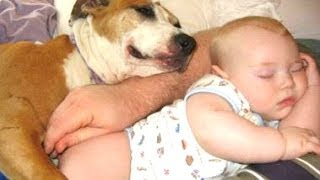 Cats And Dogs Sleeping With Babies Compilation 2014 [NEW]