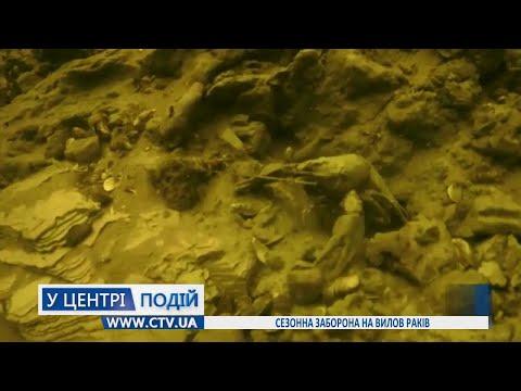 Телеканал C-TV: Сезонна заборона на вилов раків
