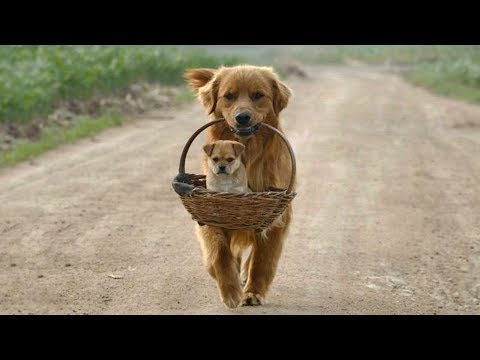Cute is Not Enough - Funny Cats and Dogs Compilation #143