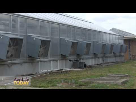 Congressmen visit Texas A&M AgriLife Research facilities