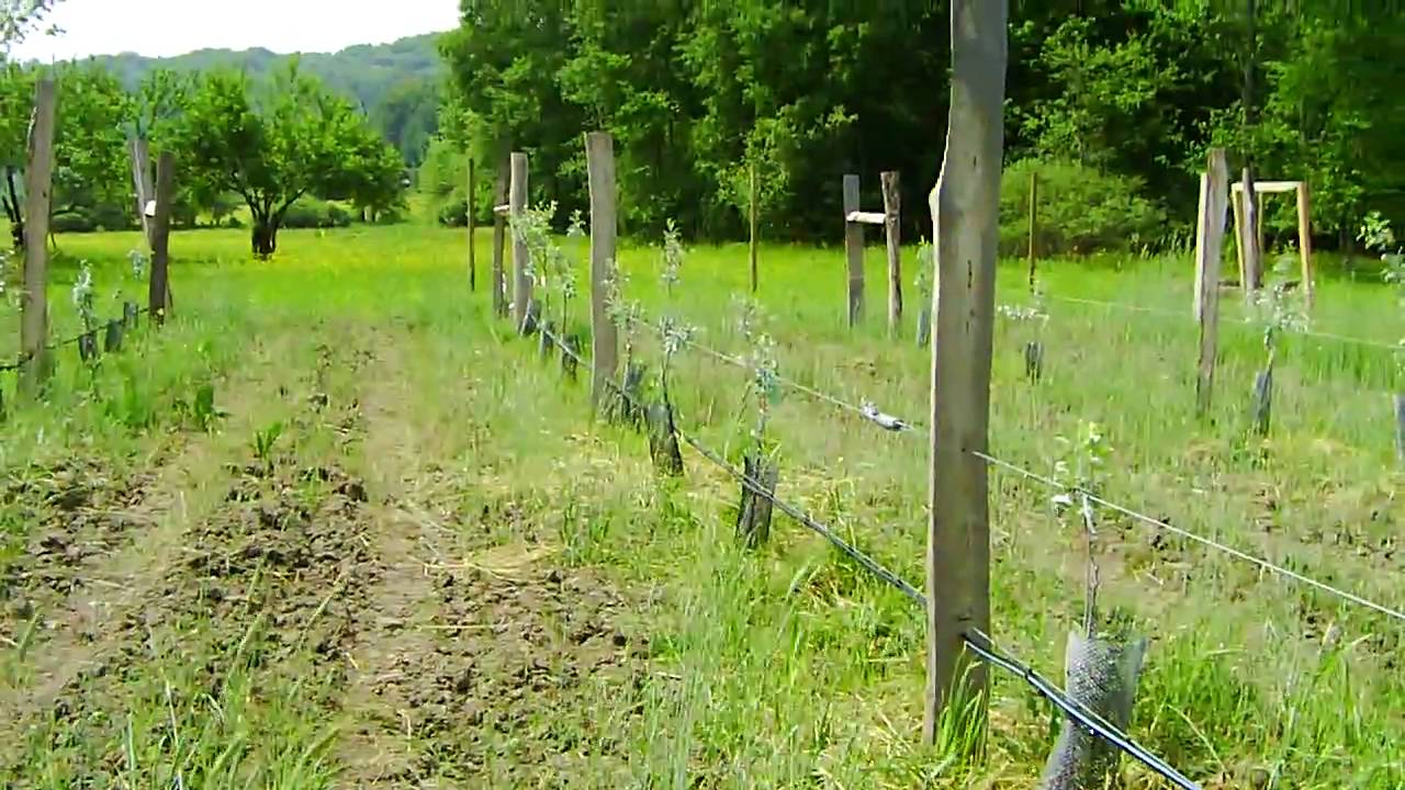 Orchard Diary 5 31 2010 Drip Irrigation System Part 1