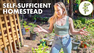 Homesteading Couple Hasn't Bought Groceries in a Year of Self-Sufficient Living