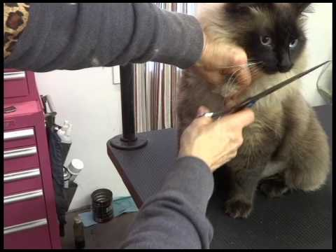 warning!-do-not-use-scissors-to-cut-cat-mats