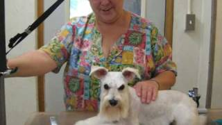 Mississippi Grooming School - Pet Care - Grooming Services - Canine Country Club
