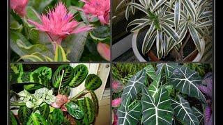 Комнатные растения для восточного окна