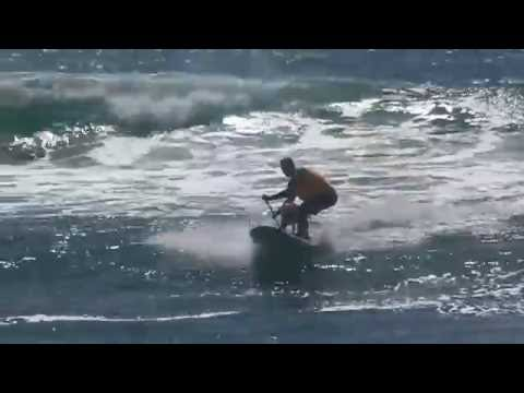 Unleashed by Petco Surf City Surf Dog® 2016 Highlights