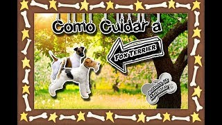 Fox Terrier | The dog catches mice |(Pets) |Pet Care|