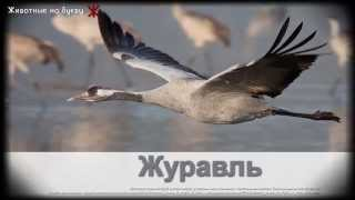 Животные на букву Ж (1)