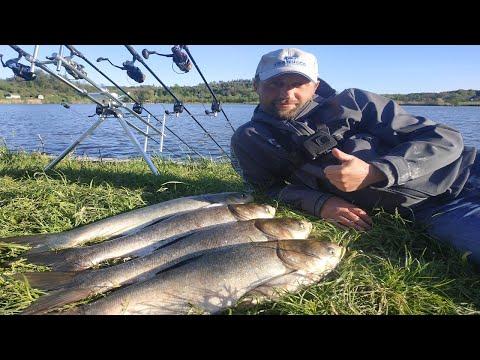 КАК ПОЙМАТЬ ТОЛСТОЛОБА! ЛОВЛЯ ТОЛСТОЛОБА НА ТЕХНОПЛАНКТОН! рыбалка на толстолобика
