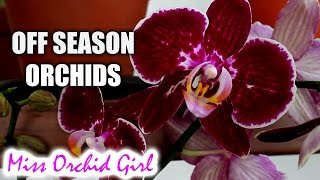 When will off season Orchids bloom?