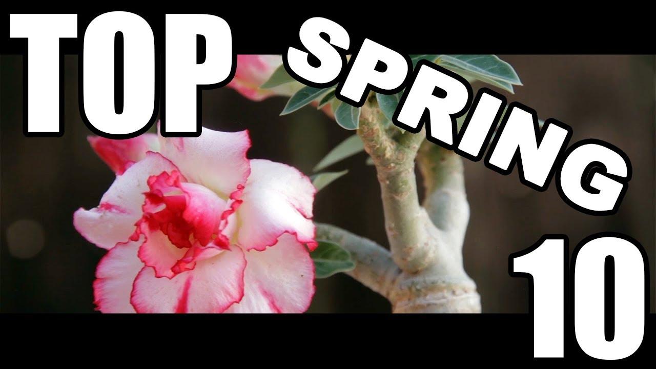 Top Ten Succulents for Spring