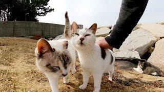 砂浜に行ったらカワイイ猫の親子が3匹揃ってお出迎えしてくれた
