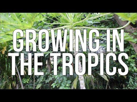 GROWNIG IN THE TROPICS!!