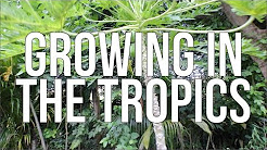 GROWNIG IN THE TROPICS!!