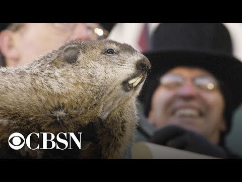 Groundhog Day 2019: Punxsutawney Phil's winter prediction, live stream