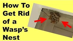 HOW TO GET RID OF A WASP'S NEST AND KILL THE WASPS - SO EASY!