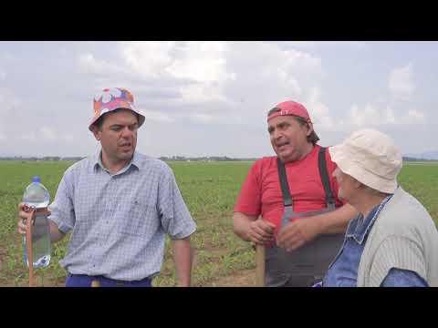 Dobro jutro, komsija - Kamile na Srpski nacin (BN Televizija 2019) HD