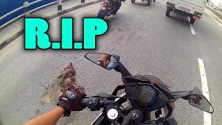 Bye Bye Cylon Dai | RIP, Poor  Dead Dog In The Street...
