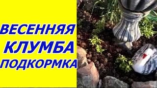видео Выбор цветов для весенней клумбы