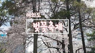 여의도 벚꽃축제   일상브이로그  Yeouido Che…
