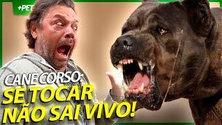 CANE CORSO, SE CORRER O BICHO PEGA SE FICAR O BICHO COME! | EP.1 | CRIAÇÃO E CRIADOR